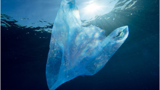 A plastic bag under the ocean.